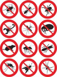 control plagas en sevilla